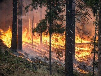 Защиту лесов передадут в федеральные ведомства