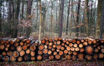 Новосибирцы нелегально спилили лес на 15 млн рублей