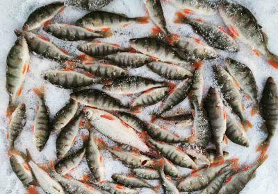 Это катастрофа: массовая гибель рыбы зафиксирована в озере Чаны