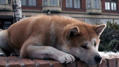Новосибирский Хатико сутками ждет возвращения хозяина на морозе