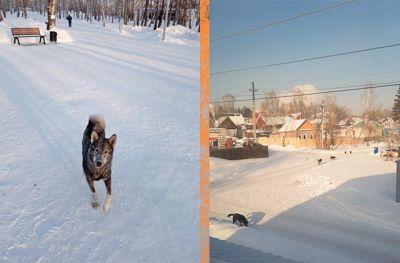 В Дзержинском районе орудует стая бродячих псов