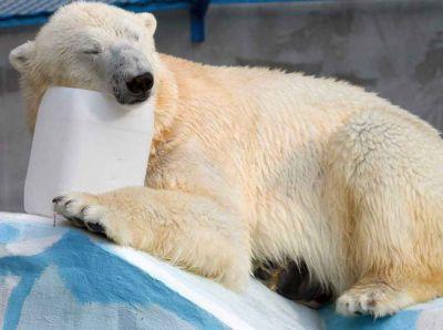 Японские СМИ сообщили о первой беременности медведицы Шилки