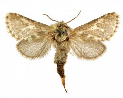 Новый вид бабочек нашли ученые на Алтае
