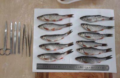 Ученые сравнили рыбу из бассейна Оби и Амазонки