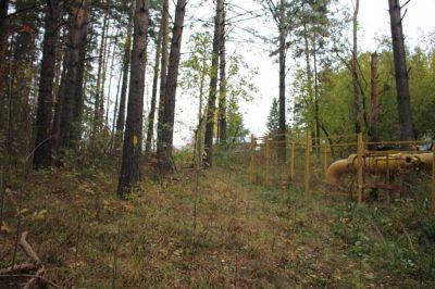 Бердский лес пойдет под сруб «Газпромом»