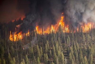 Сотни лесных пожаров вспыхнули в Новосибирской области