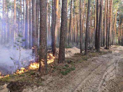 В России ежегодно из-за рубок исчезает до 100 тысяч гектаров неосвоенных лесных массивов