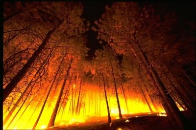 Сотни тысяч гектаров леса продолжают гореть в Сибири с началом осени