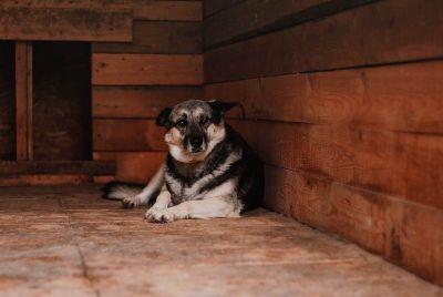 Голодающим собакам из новосибирского приюта собирают деньги на корм