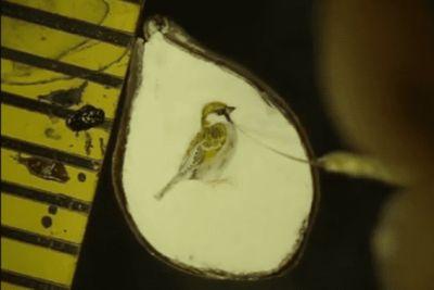Сибирский Левша нарисовал птицу на срезе зернышка: процесс записал на видео