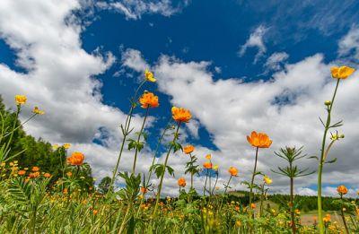 Июнь в Новосибирской области будет теплее обычного
