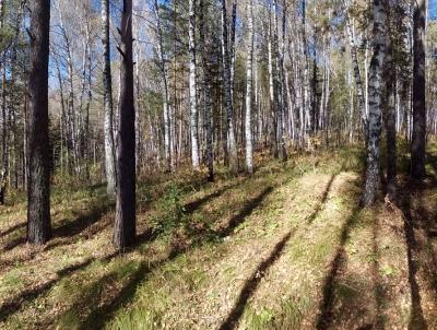 Миллионы рублей и проблем новосибирских лесхозов