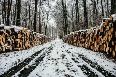 В деле о незаконных вырубках леса в Томской области остались только свидетели