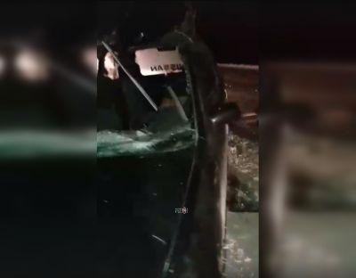 Кинулась под колеса: подробности ДТП с лосихой на новосибирской трассе