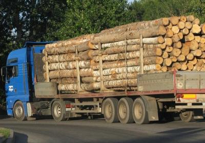Лес в Сибири будет истреблен за 15 лет – мнение ученого