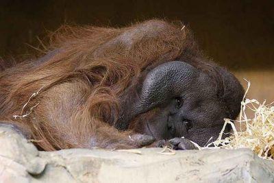 Новосибирский зоопарк рассказал, кто и с кем спит
