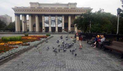 Жительница Новосибирска «покормила голубей» на 300 тысяч рублей