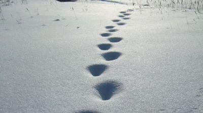 По следам на снегу вычислили преступника под Новосибирском