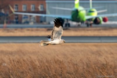 Опасную свалку у аэропорта Толмачево проверят московские эксперты