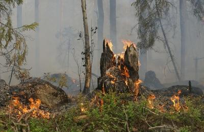 Последний лесной пожар тушат в Сибири