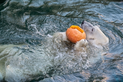 Обитатели Новосибирского зоопарка отметят Хэллоуин-2019