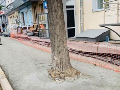 Деревья в центре Новосибирска зацементировали