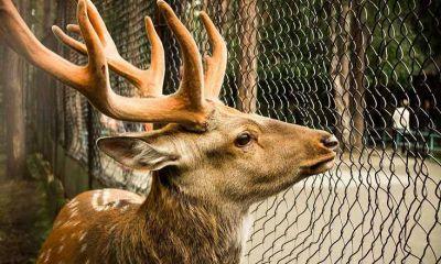 Новосибирский зоопарк избавляется от клеток и решеток