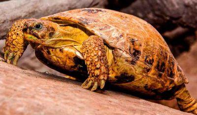 Восемь черепах-перебежчиков поймала ФСБ Новосибирска