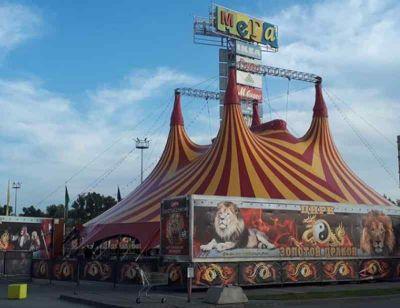 Цирк-шапито «Золотой дракон» проиграл в суде новосибирской зоозащитнице