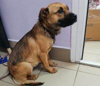 Новокузнецкие ветеринары спасают собаку с вросшим ошейником