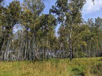 Участки леса стали промзоной под Новосибирском