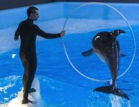 Дельфины из Новосибирска снялись в фильме для РЕН ТВ