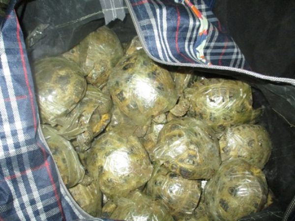 400 обмотанных скотчем черепах пытались переправить через границу в поезде «Алматы — Новосибирск»