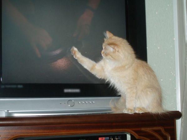 Новосибирец пытался откупиться от приставов котом