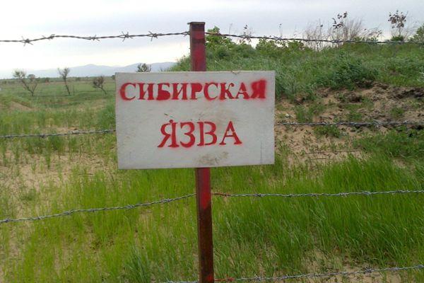 Лекарствами от сибирской язвы запаслись в Новосибирской области