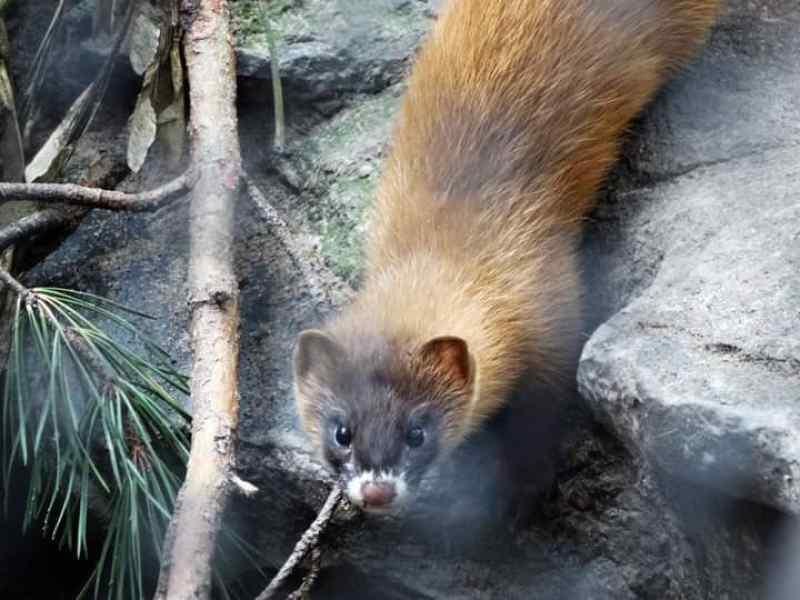 Новосибирский зоопарк отпустил на волю часть обитателей