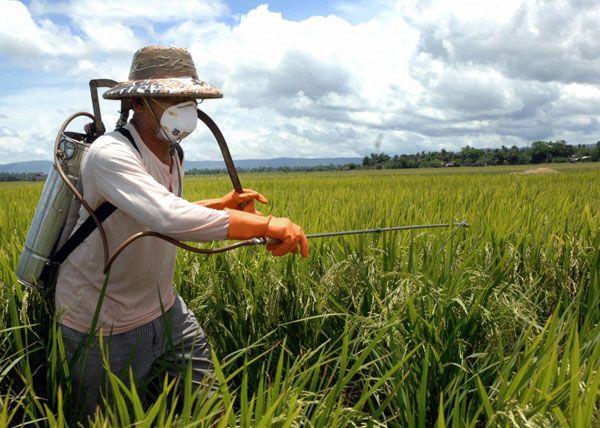 «Сян жуй» накажут за засорение новосибирских земель пестицидами
