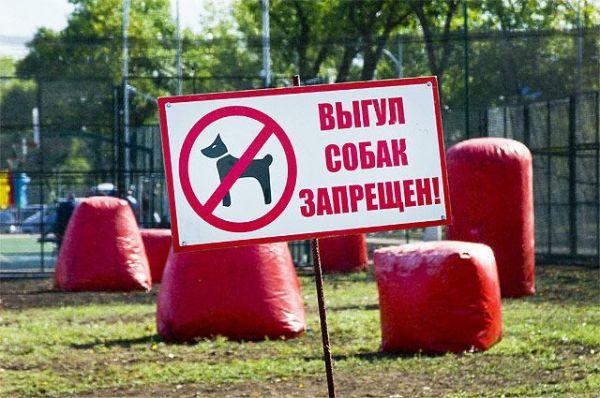 70 новосибирцев оштрафовали за выгул собак у Монумента славы