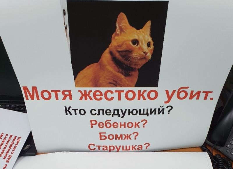 Защитники кота Моти добились возбуждения уголовного дела