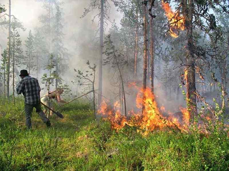 Названа главная причина лесных пожаров в Новосибирской области