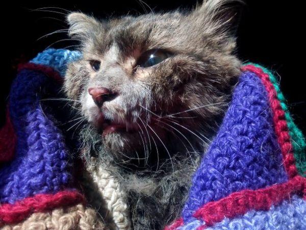 Покалеченный под капотом авто кот умер в ветеринарной клинике
