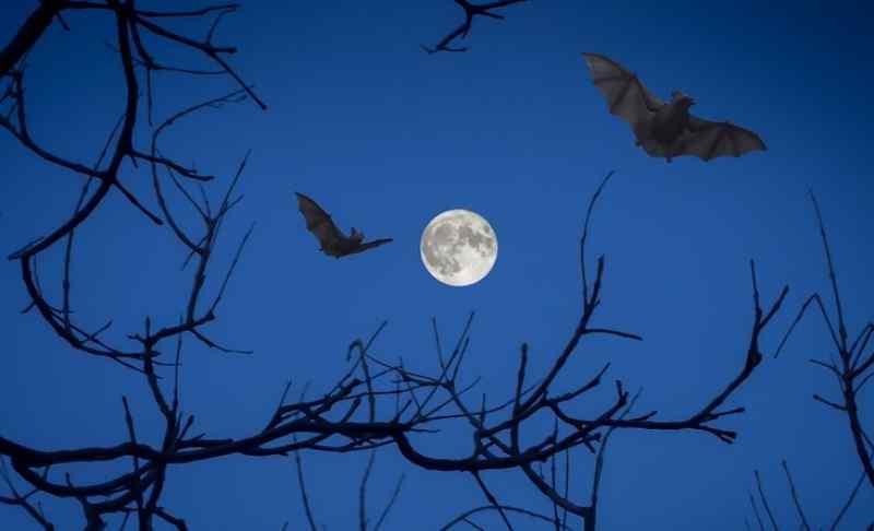 Ковид, летящий на крыльях ночи