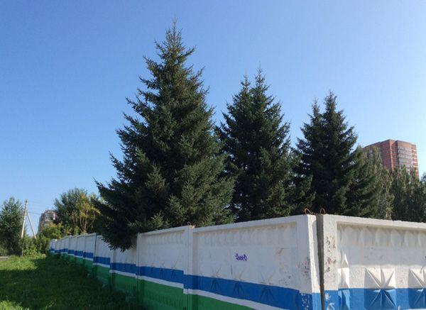 Давайте сделаем Дородных с топором символом 125-летия Новосибирска