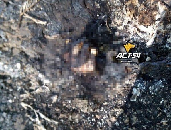 Человека сожгли в костре из покрышек в Новосибирске