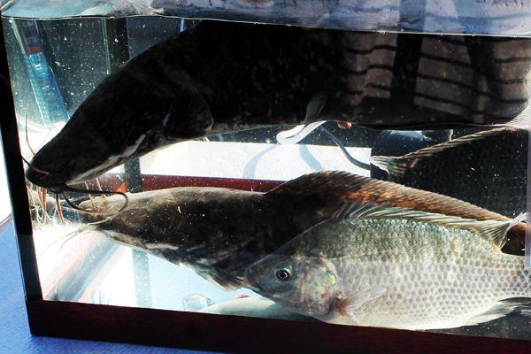 Свежая рыба круглый год