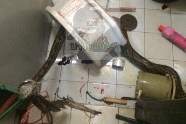 Минздрав призывает к бдительности — питон спрятался в унитазе и вцепился тайцу прямо в пенис