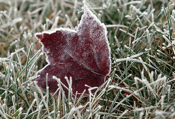 В начале недели в пригороде Новосибирска ожидаются заморозки
