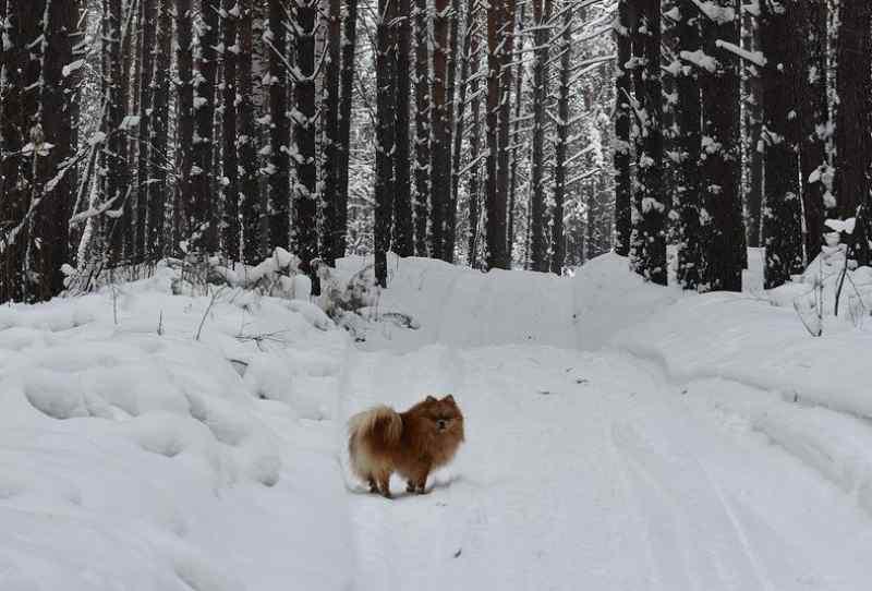 Первые трехдневные морозы ударят в Новосибирске