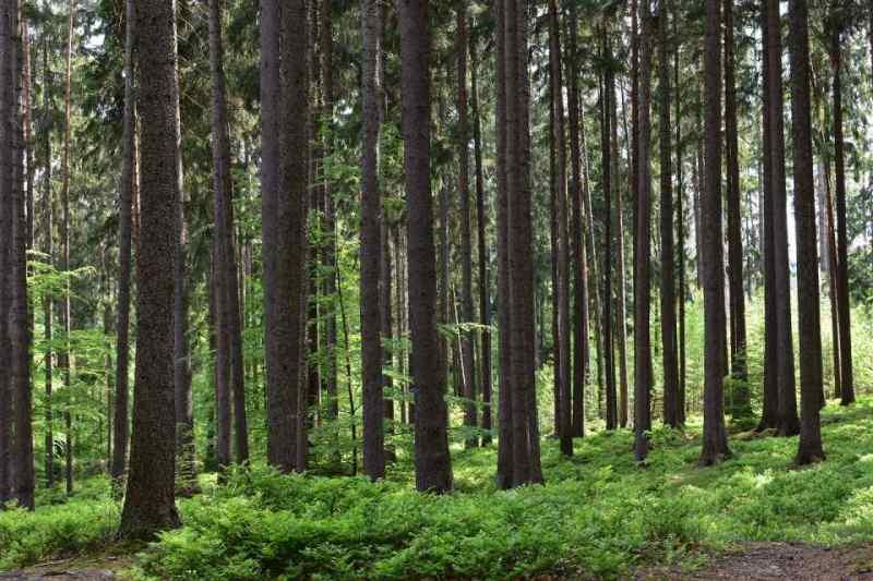 Вокруг Новосибирска запретили свалки